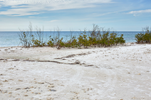 Island State Beach is a great place to relax and unwind.