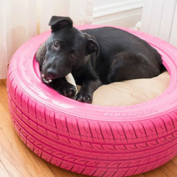 dog tire bed