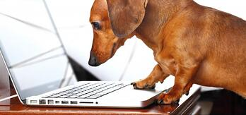 take-your-dog-to-work-day1-e1433924816920-808x378