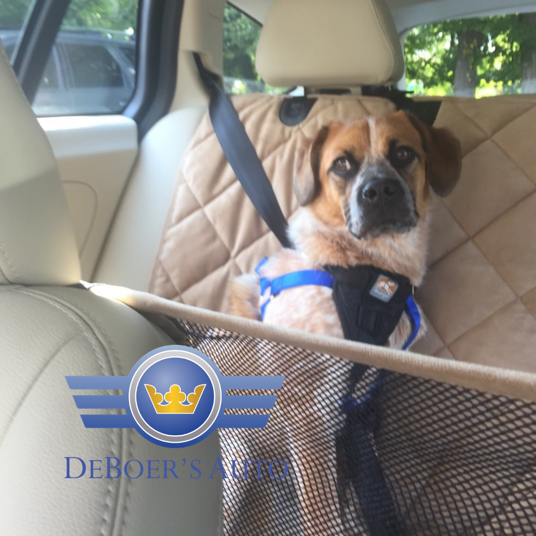 piper the dog in seat harness